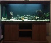 аквариум 500л с тумбой,  крышкой.
