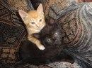 Котики в дар